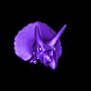 Triceratops_Skull_1.stl Download free OBJ file Triceratops Skull • 3D printable model, Dynastinae