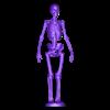Whole_skeleton.stl Télécharger fichier STL gratuit Squelette humain • Objet imprimable en 3D, Cornbald