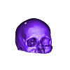 CerebrixSkullFixed.stl Download free STL file Cerebrix Human Skull • 3D printing template, Cults